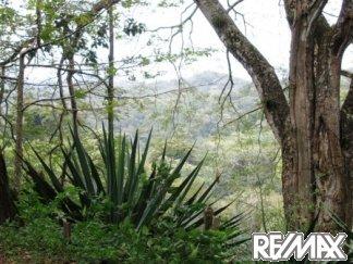 Incredible vegetation